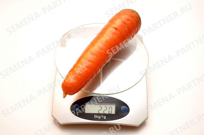 Морковь Канада F1 0,5 гр.