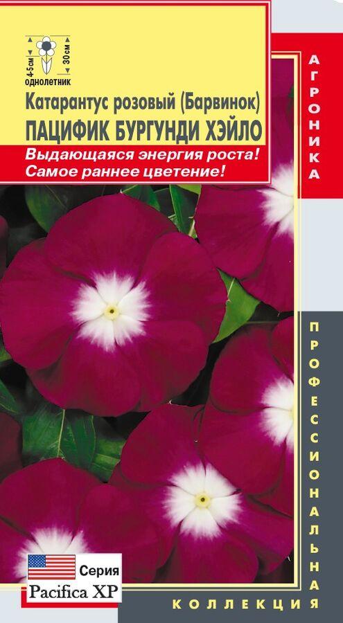 Цветы Катарантус Розовый (Барвинок) Пацифик Бургунди ЦВ/П (ПЛАЗМА) однолетнее 30см