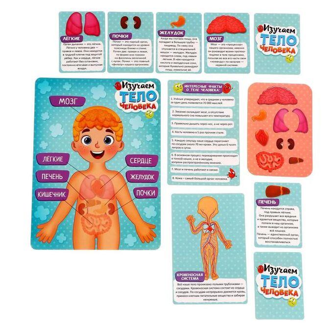 Магнитный набор в коробке «Тело человека»