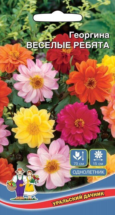 Цветы Георгина Веселые Ребята (Марс) (высота 30-100 см,простые но крупные,яркие и эффектные)